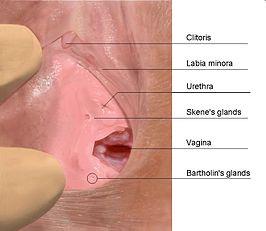 vloeistof vrouwelijke ejaculatie