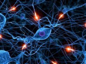 g-spot zenuwuiteinden