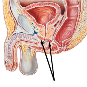 kegelspier vroegtijdige ejaculatie
